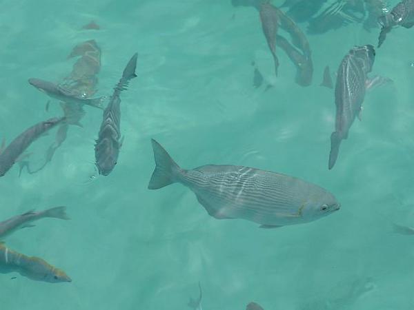 26_Sun_Island_poissons.jpg