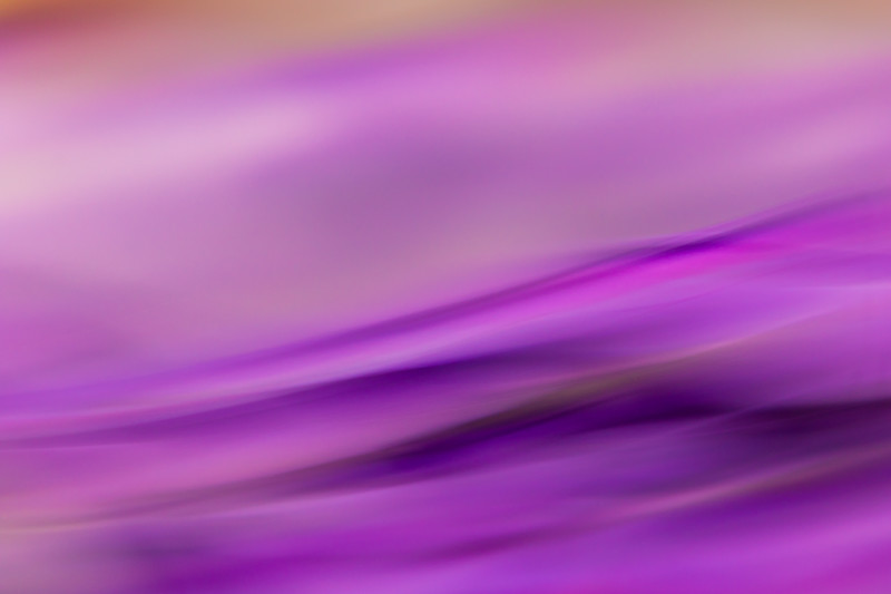 Waves of purple glide across this image