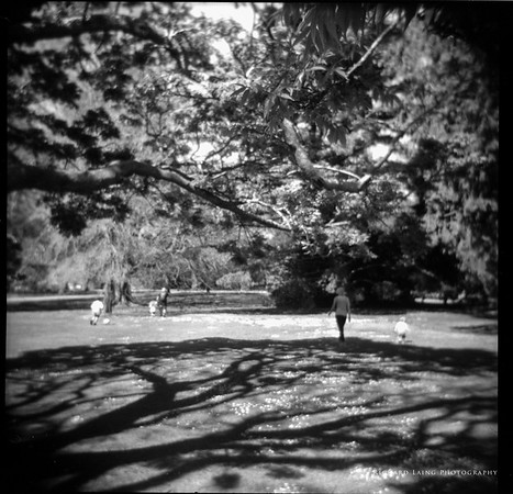 Hagley Park Holga