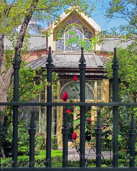 Behind the Fence ~ While out and about, I stopped by the local library, and looked through the wrought iron fence into the garden.  Although only the red rose was in bloom, I thought it made a pretty picture.