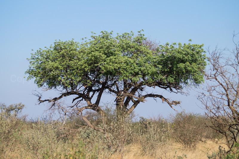 Madikwe-17.jpg