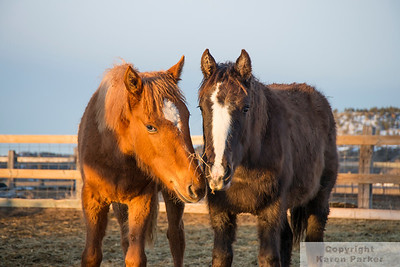 Black Hills Wild Horse Sanctuary - February and March, 2014