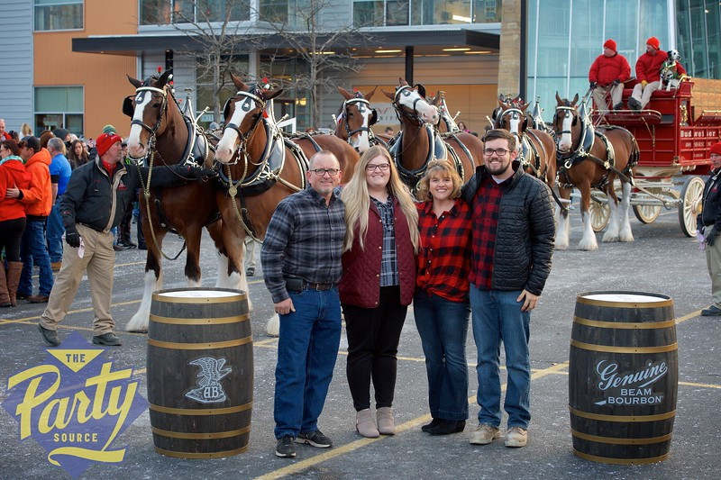 Clydesdale Portraits 277.jpg