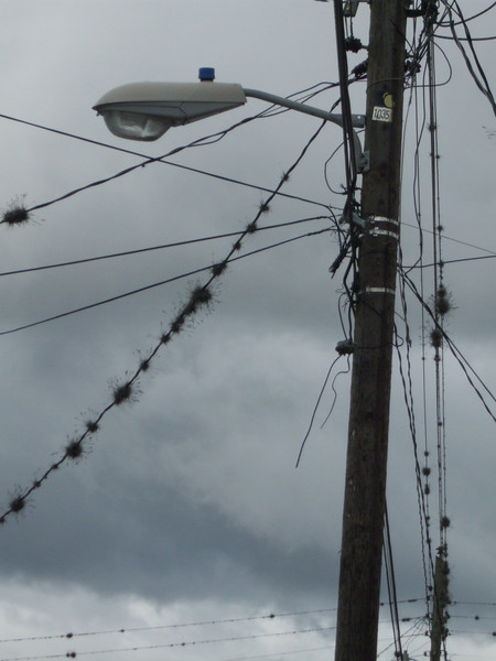 Jinotega city wiring & air moss on power pole with light
