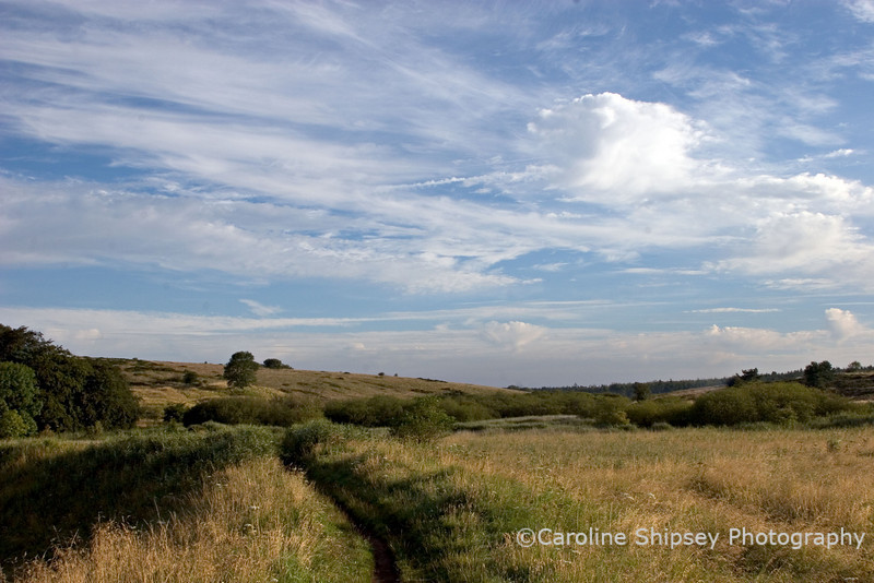 From Shepton Hut towards Stockhill Skyscapes