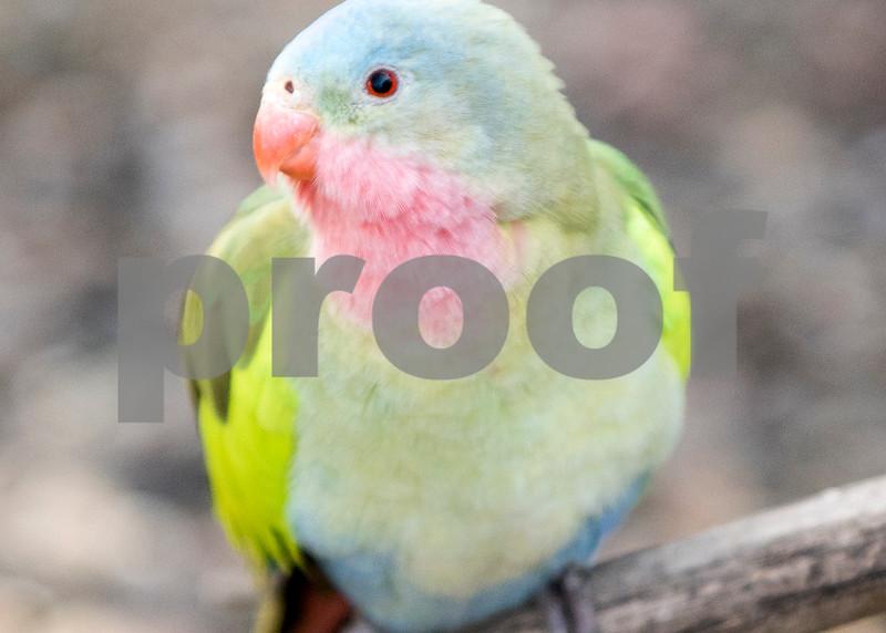 birds 3o mm.jpg