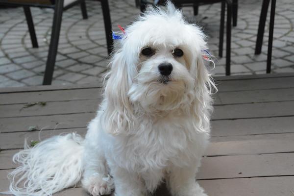 Sophie 2016 (5 years old)