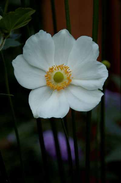 Anemone (10).jpg