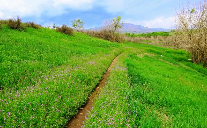 Local Hikes (651).JPG