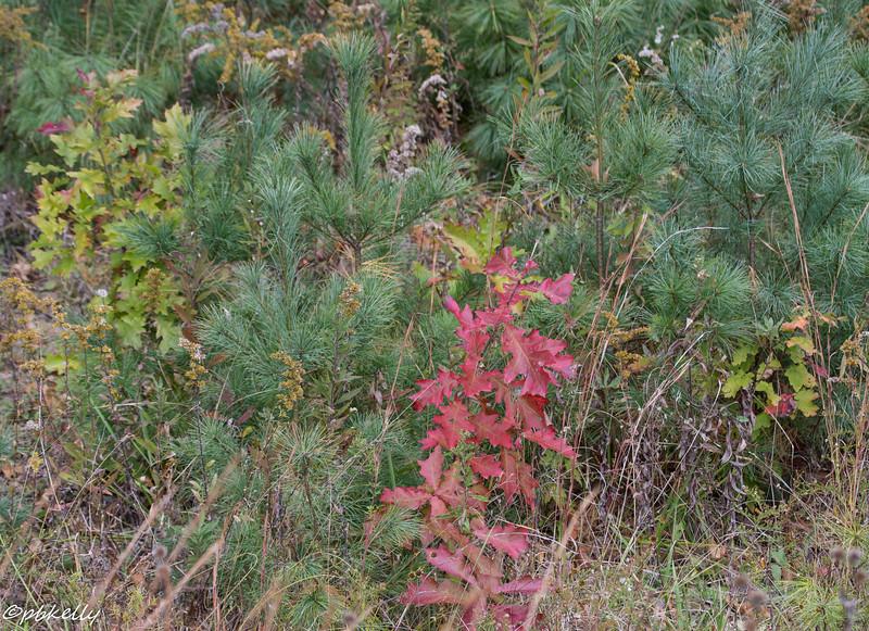 fall mini-trees 101615-2.jpg