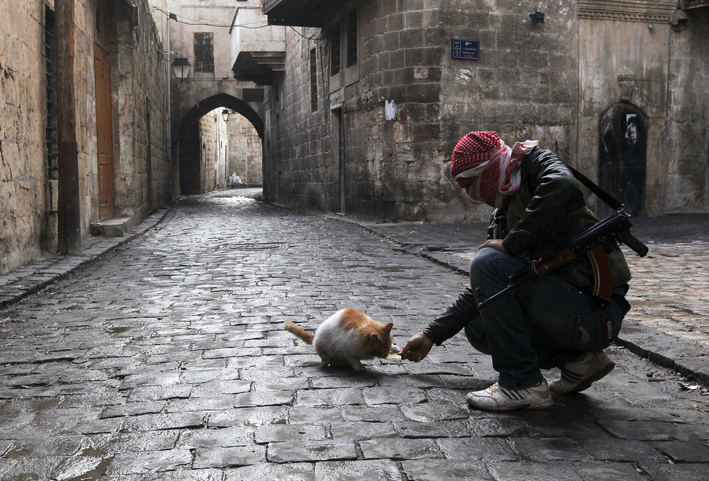 . A Free Syrian Army fighter feeds a cat in the old city of Aleppo January 6, 2013. REUTERS/Muzaffar Salman