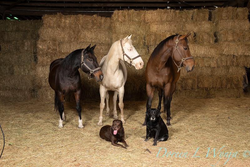 Horse family portrait_118.jpg