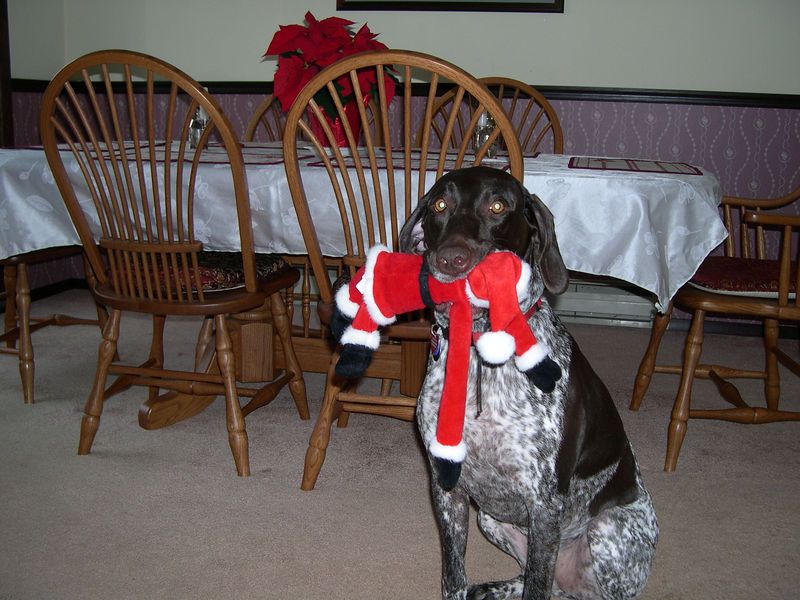Bad Dog!  No gifts from Santa this year!