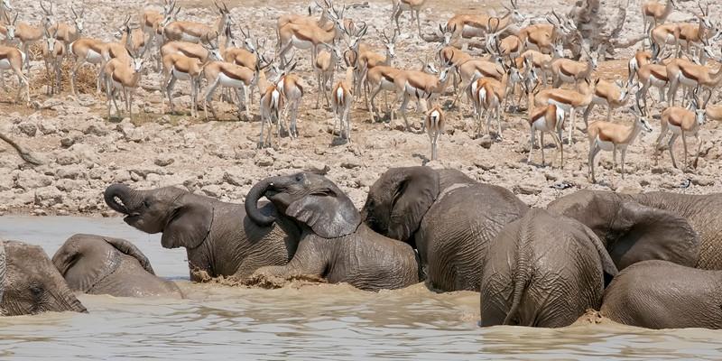 Namibia 69A8206.jpg