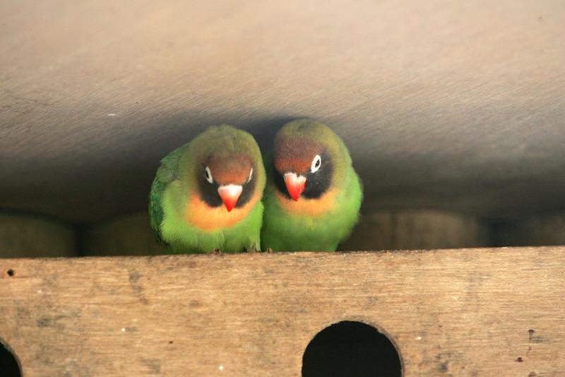 Newquay Zoo 337.jpg