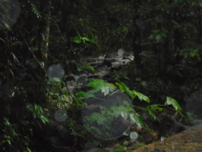 Excursion Rainforest