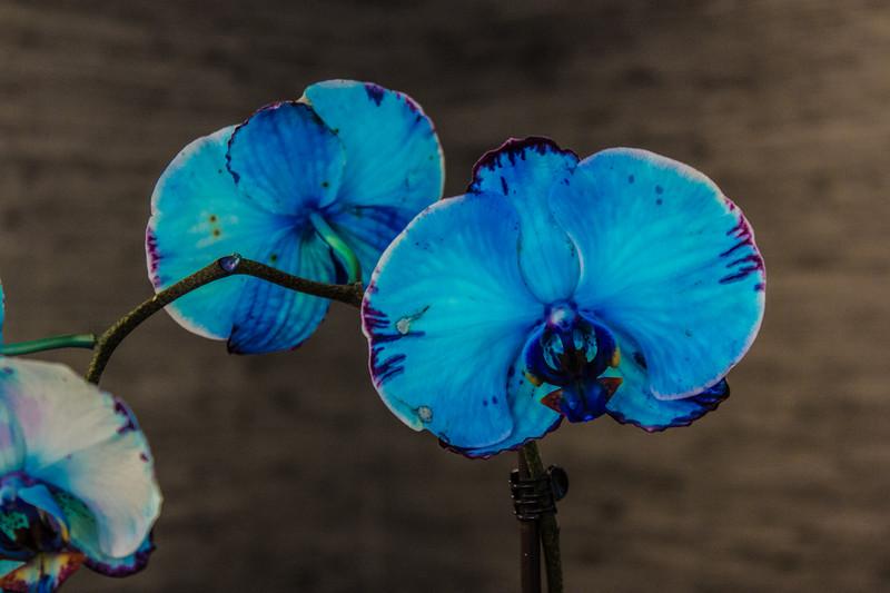 140511, Orchids LPF.jpg
