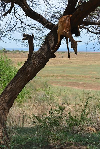 East Africa Safari 465.jpg