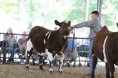 Montgomery County Fair Open Beef Show 2018