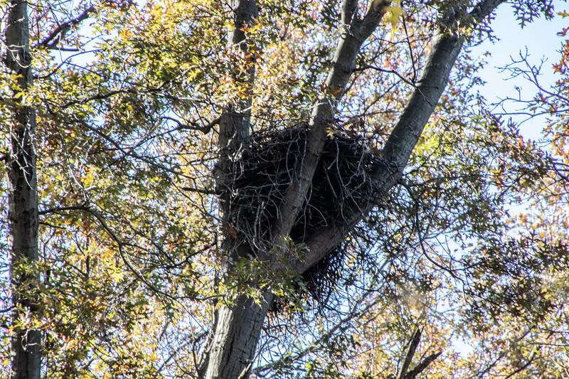 nest 111819-2.jpg