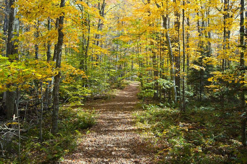 Adirondack-128.jpg