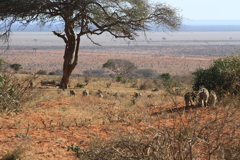 Kenya 2017 #1 3419.JPG