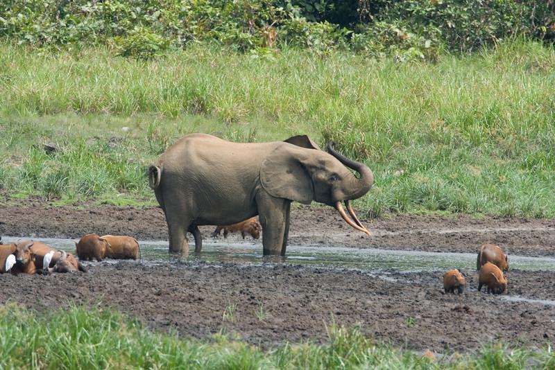Big bull elephant at the Bai.