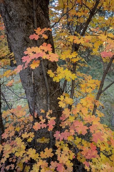 Mt Lemmon Colors 10-26-2018c-.jpg