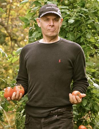 Tomatos 4