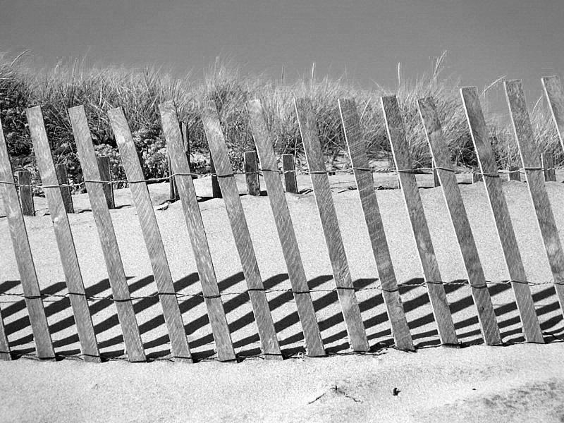 Dune Fencing