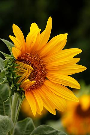 Home Garden Plants & Flowers