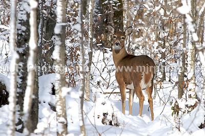Deer, New Kingston, NY 11.17.07