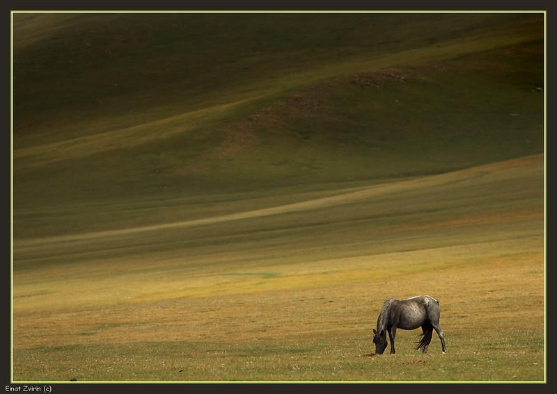 2016-07-21_2432 The Lone Horse.jpg