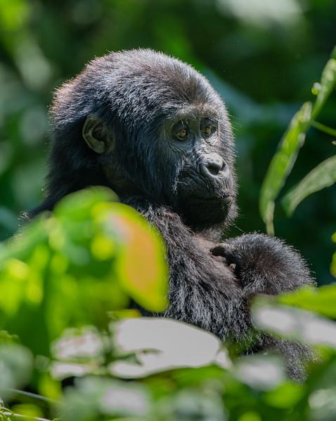 Uganda_T_Gor-2124.jpg
