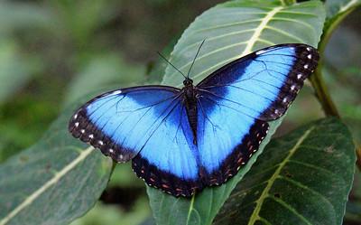 Butterflies at Si Como No