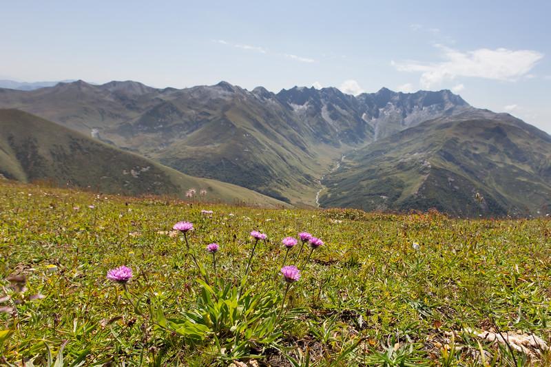Ushguli,  Mt Guri, Aster