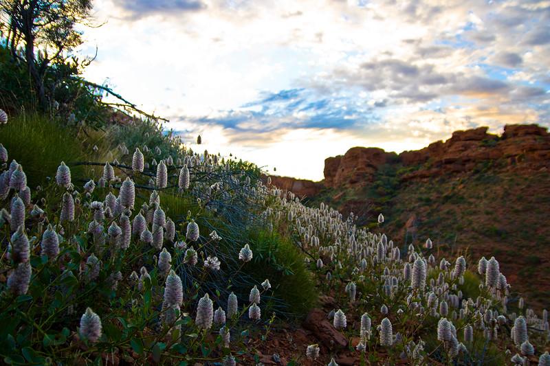 2010-08-19 Trip Day Four Kings Canyon-0080.jpg