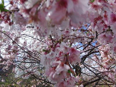 2009 - Spring in DC