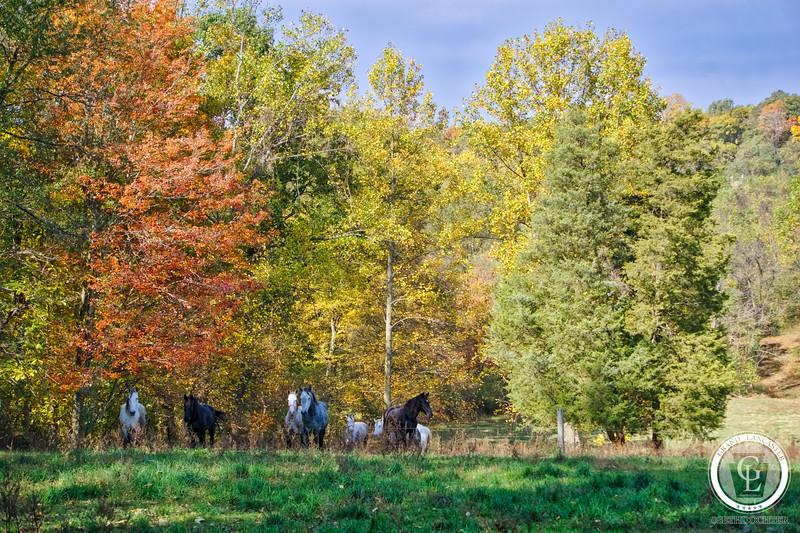 1088- Autumn 2016 - Susquehannock Horses (p,b).jpg