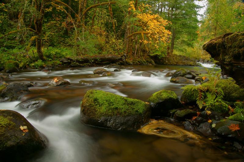 Roaring River, Mt Hood National Forest