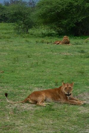 1494239978African-Safari-222.jpg