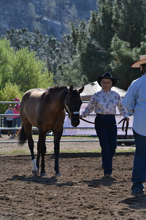 Hairy Horse Show March 15