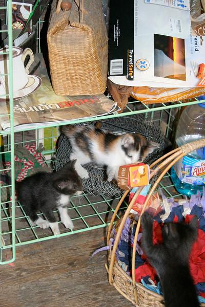 Chiang Mai Thailand 2008 56.jpg