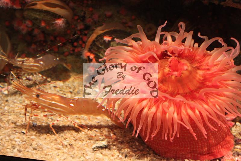 Aquarium 20010.jpg