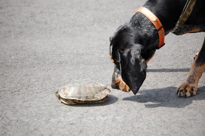 Jackson meets new friend