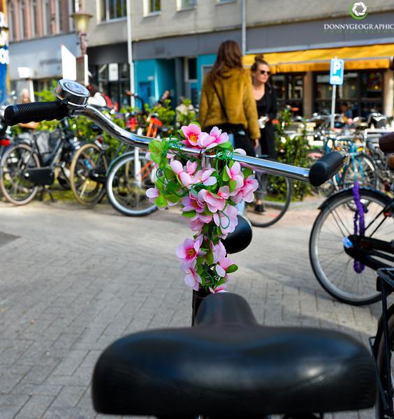 Bikes and flowers.jpg