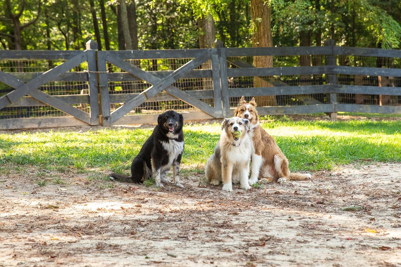 Jazzy and friends dogs take 2 with Nicky (52).jpg