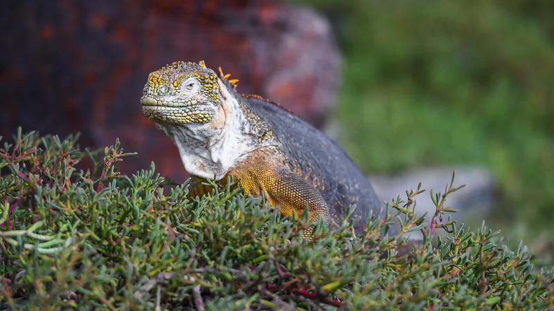 2018 Galapagos -Evolution