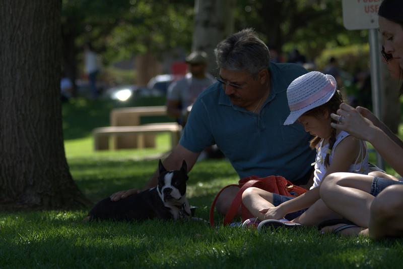 boston terrier oct 2010 149.jpg