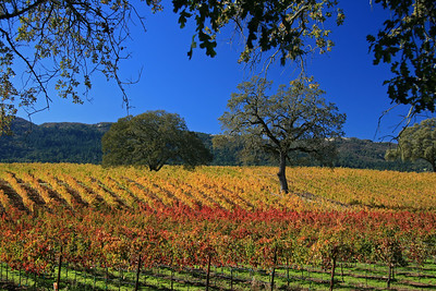 Wine Country of Northern California